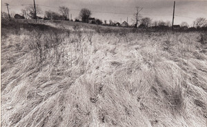 Don Camp: Wintergrass () Gelatin silver print