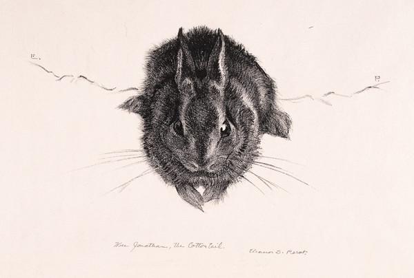 Eleanor S. Perot: Wee Jonathan (the Cotton Tail) (Undated) Lithography