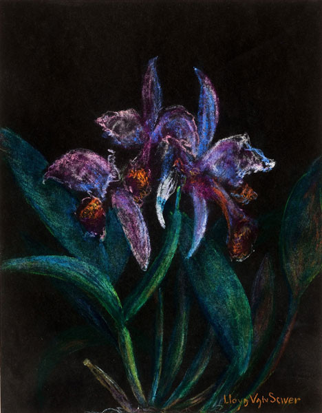 Lloyd Van Sciver: Orchid (Undated) Pastel on paper