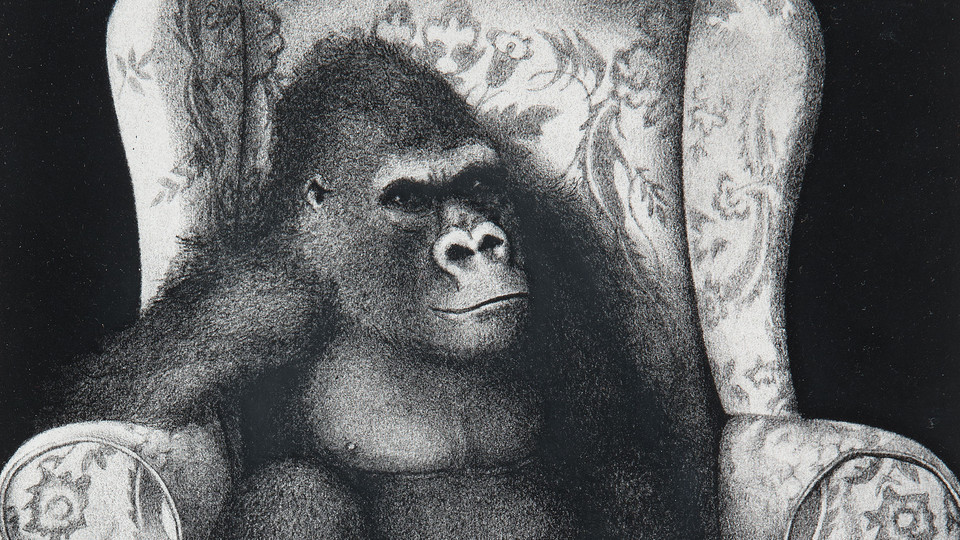 Untitled (Gorilla in Upholstered Chair)