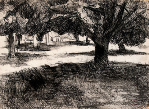 Edith Neff: [Trees (Along the Schuylkill)] (c. 1967-1969) Charcoal on paper