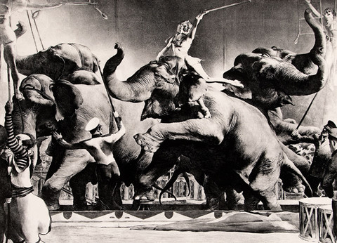 Robert Riggs: Elephant Act (1943) Lithography